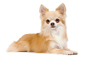 DOG 19 JE0027 01