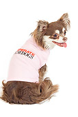 DOG 19 JE0029 01