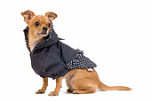DOG 19 JE0033 01