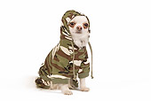 DOG 19 JE0034 01