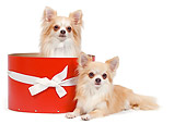 DOG 19 JE0036 01