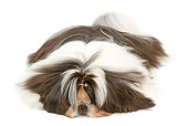 DOG 19 JE0051 01
