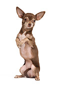 DOG 19 JE0052 01