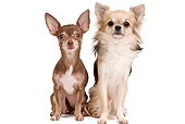 DOG 19 JE0056 01