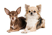 DOG 19 JE0057 01