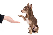DOG 19 JE0058 01
