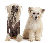 DOG 19 JE0061 01