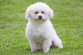 DOG 19 JE0062 01