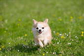 DOG 19 JE0065 01