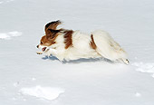 DOG 19 JN0004 01