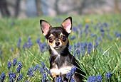 DOG 19 JN0008 01