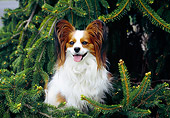 DOG 19 JN0009 01