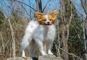 DOG 19 JN0010 01