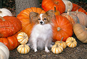 DOG 19 JN0013 01