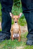 DOG 19 JS0001 01