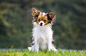 DOG 19 JS0002 01
