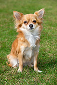 DOG 19 JS0003 01