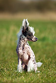 DOG 19 JS0007 01