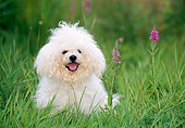 DOG 19 KH0017 01
