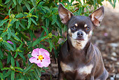 DOG 19 LS0005 01