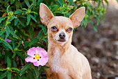 DOG 19 LS0006 01