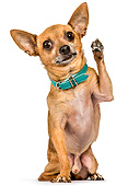 DOG 19 MQ0012 01