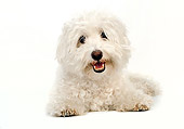 DOG 19 MR0010 01