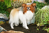 DOG 19 NR0003 01