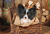 DOG 19 NR0006 01
