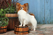 DOG 19 NR0008 01