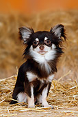DOG 19 PE0002 01