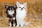 DOG 19 PE0003 01