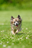 DOG 19 PE0005 01