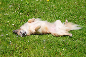 DOG 19 PE0007 01