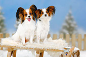 DOG 19 PE0013 01
