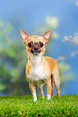 DOG 19 PE0014 01