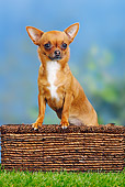 DOG 19 PE0016 01