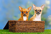 DOG 19 PE0017 01