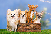 DOG 19 PE0018 01