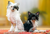 DOG 19 PE0021 01