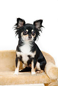 DOG 19 PE0022 01