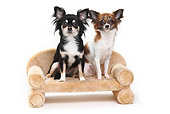 DOG 19 PE0023 01
