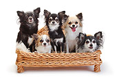 DOG 19 PE0027 01