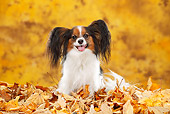 DOG 19 PE0028 01