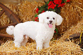 DOG 19 PE0033 01
