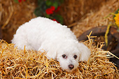 DOG 19 PE0034 01