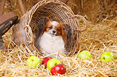 DOG 19 PE0035 01