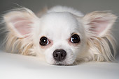 DOG 19 RD0011 01