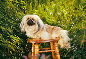 DOG 19 RK0024 01