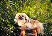 DOG 19 RK0024 05
